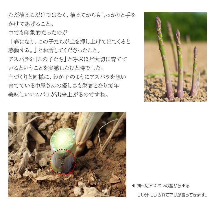 ただ植えるだけではなく、植えてからもしっかりと手をかけてあげること。中でも印象的だったのが「春になり、この子たちが土を押し上げて出てくると感動する。」とお話してくださったこと。アスパラを「この子たち」と呼ぶほど大切に育てているということを実感したひと時でした。土づくりと同様に、わが子のようにアスパラを想い育てている中屋さんの優しさも栄養となり毎年美味しいアスパラが出来上がるのですね。