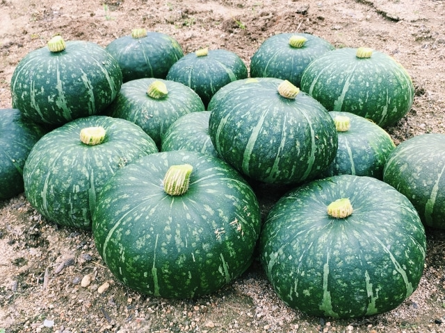 北海道はかぼちゃの生産量も全国1位!